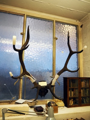 """These antlers carry a cautionary note that reads """"Dead for thousands of years…but will still have your eye out!"""""""