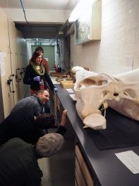 Examining samples with Senior Natural History Curator Dr Victoria Purewal