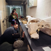 Examining samples with Senior Natural History Curator Dr Victoria Purewal